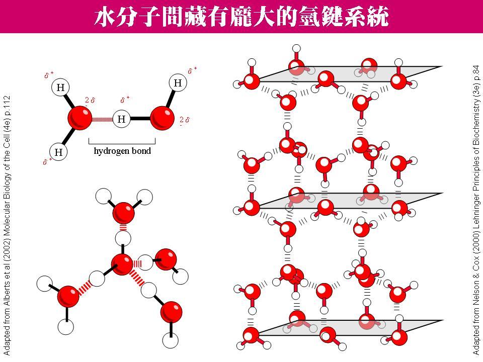 水分子氢键结构图