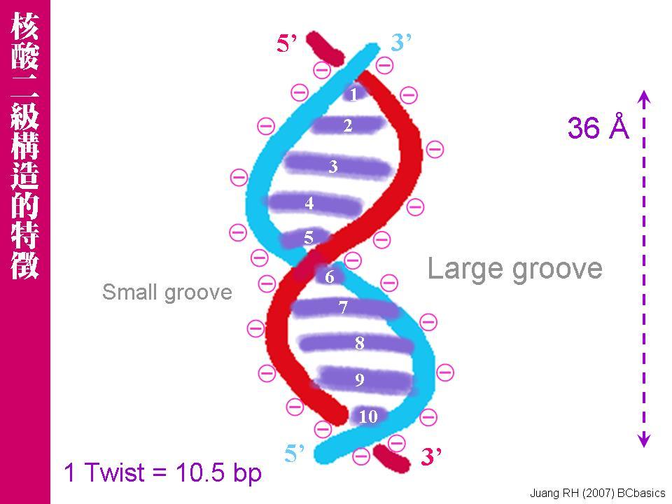 核酸在细胞的分布实验步骤