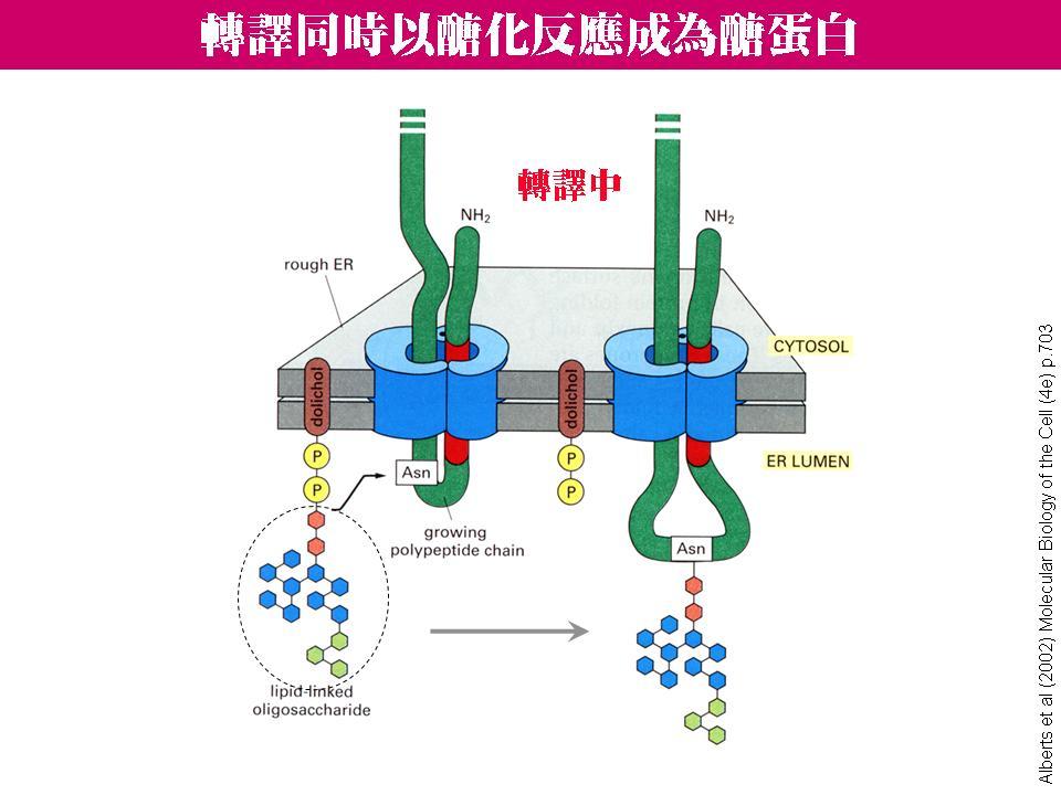 血红或肌红蛋白分子中