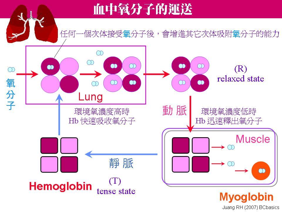 p4分子结构示意图