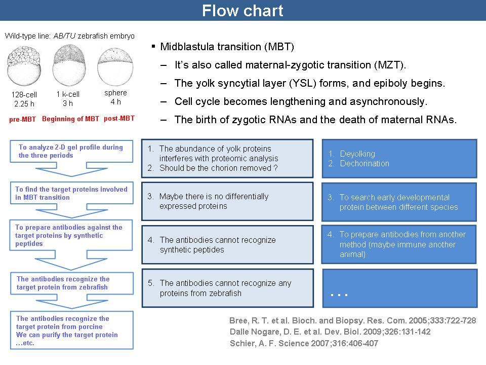 实验报告步骤流程图
